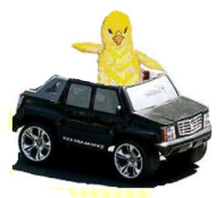 Chick in a truck